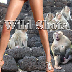 Wild Shots adult game